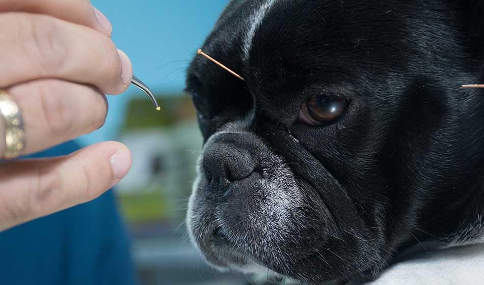 Die Tierheilpraktiker Ausbildung