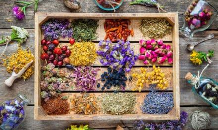 Ernährungsberater mit Heilpflanzenkunde